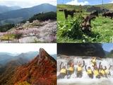 久万高原町 | 高原のまちで活躍/自然豊かな環境でのびのびと働ける!の画像・写真