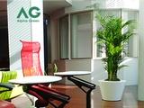 株式会社アルファグリーン | 観葉植物のレンタル~緑を使った空間のプランニングまで行う、総合園芸企業の画像・写真